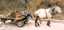 A boy on a manure cart.